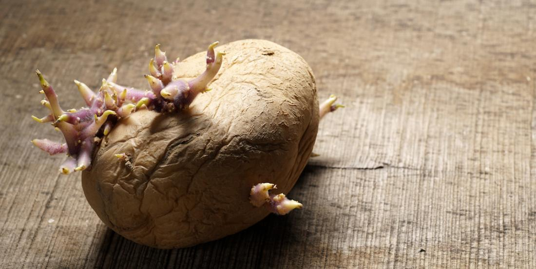 Are sprouted potatoes still safe to eat without problems ?
